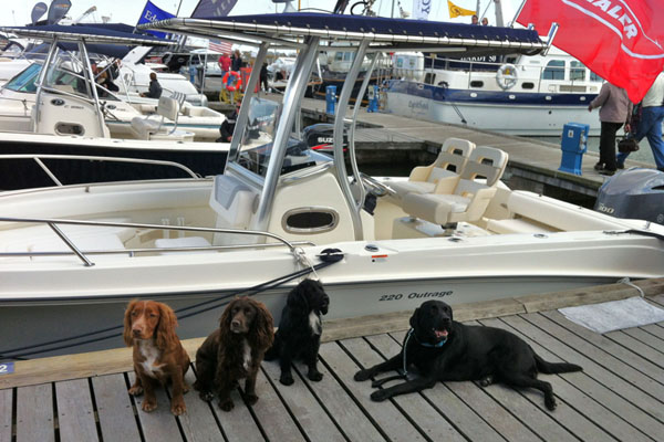 Sandbanks Boatshow Whaler Dogs 600